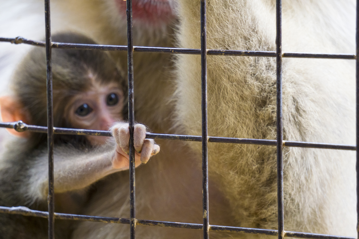 baby_monkey_in_cage.jpg