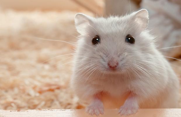 beige_mouse.jpg