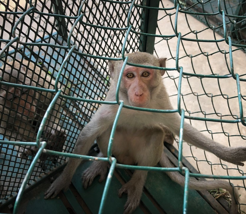 monkey_penned_crop.jpg