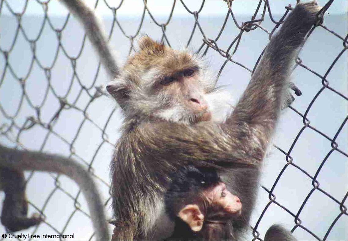 CFI_Mauritius_monkey_and_baby_wire_mesh.jpg