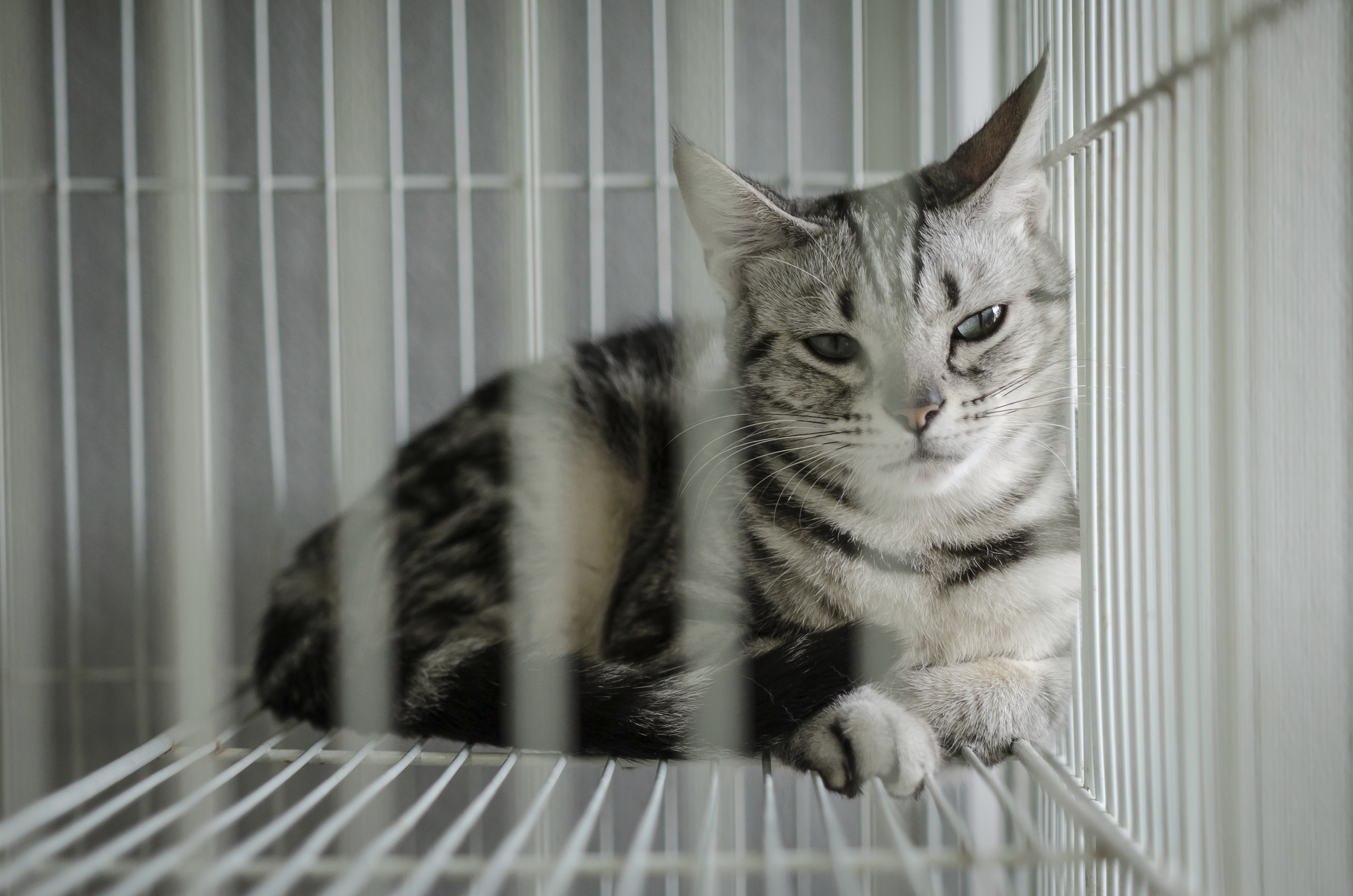 cat_sad_in_cage_grey.jpg