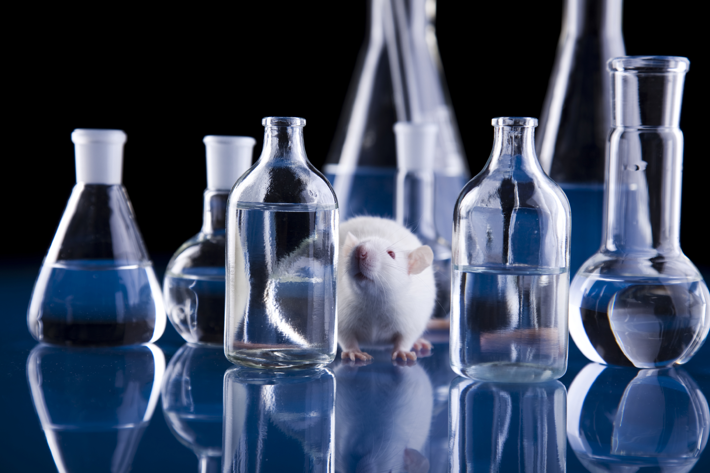 rat_amid_lab_glass_blue.jpg