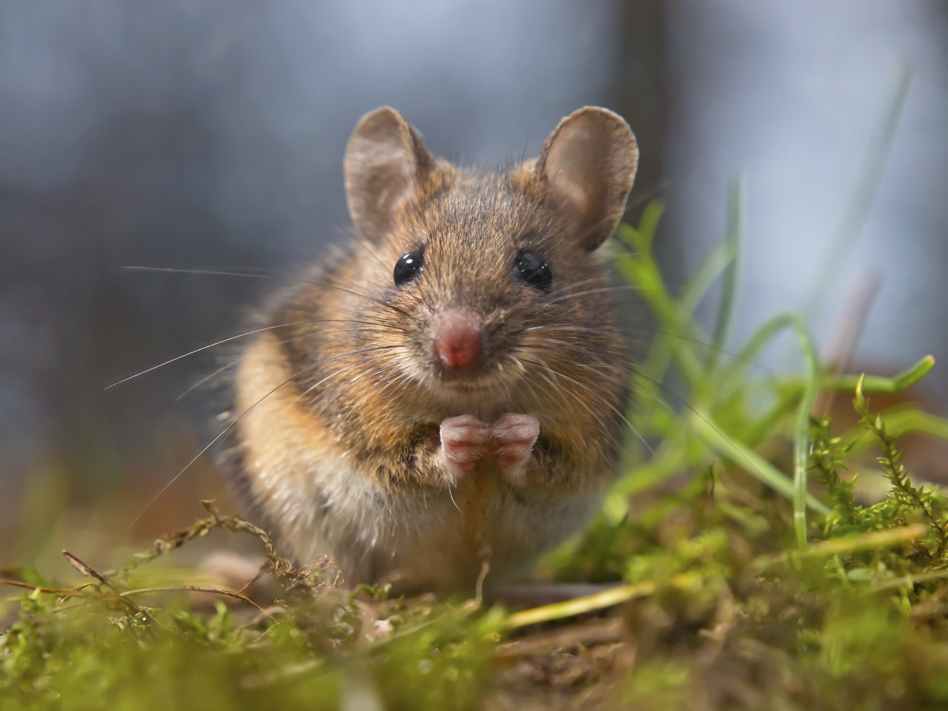 mouse_in_nature.jpg