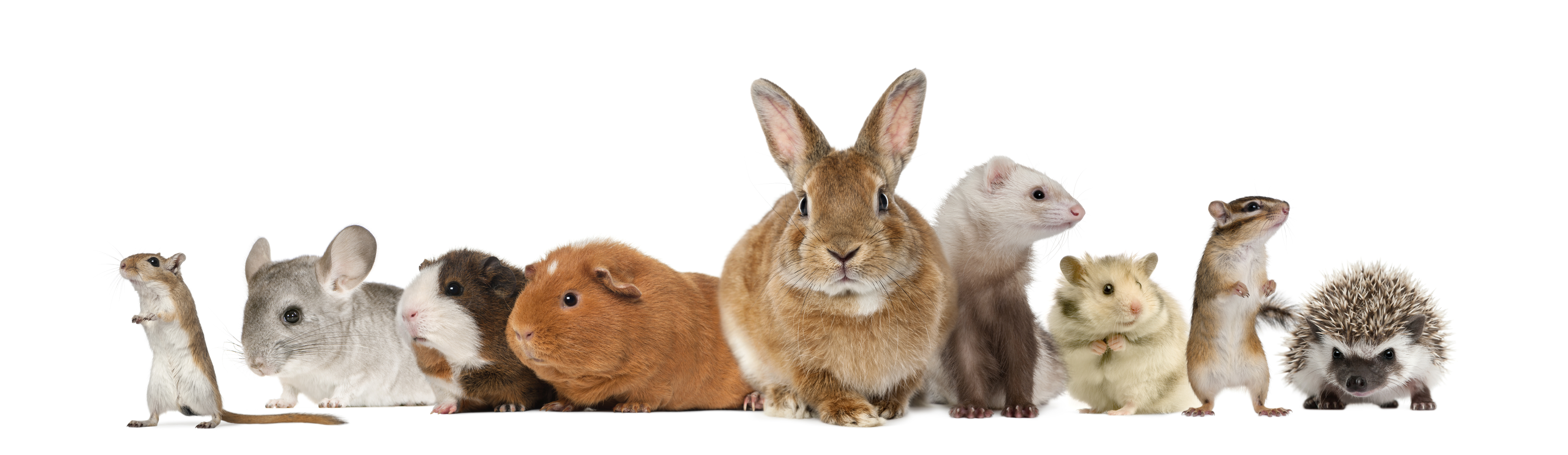 rabbit_in_group_of_small_animals.jpg