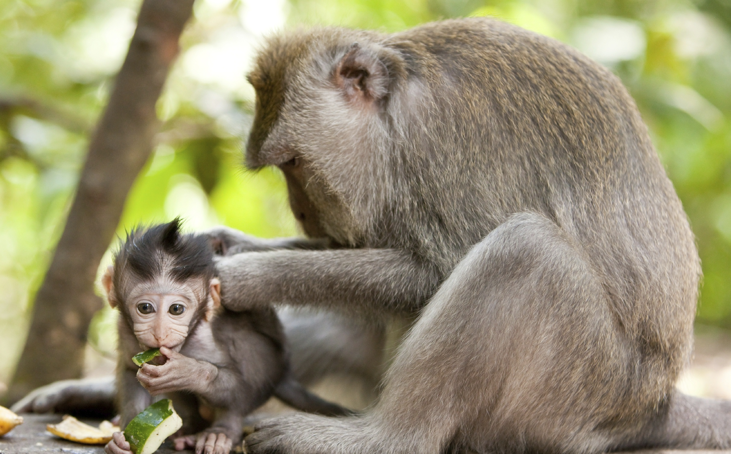 monkey_baby_w_mom_cropped.jpg