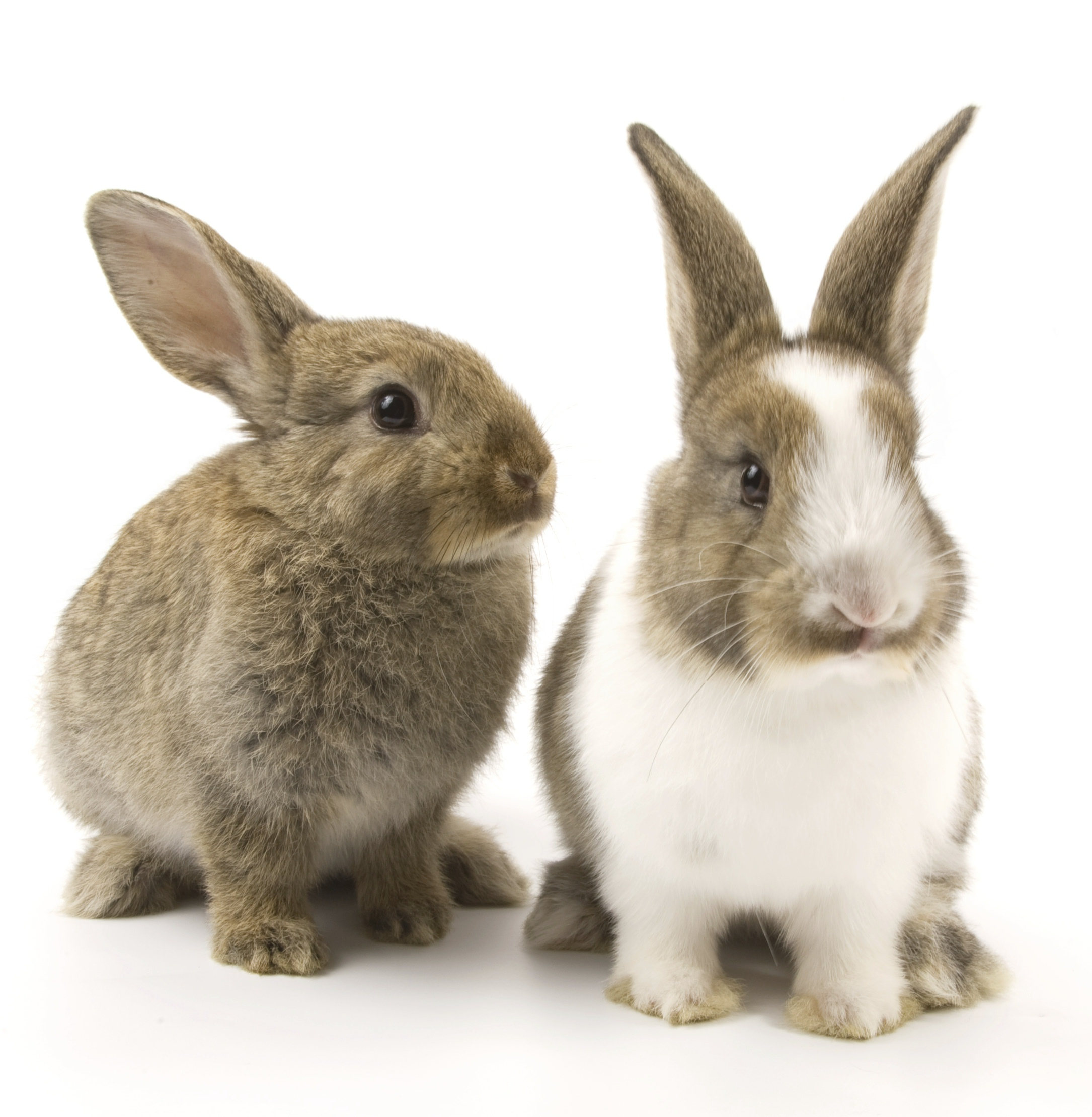 rabbits_pair_separated_cropped.jpg
