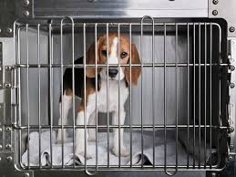 beagle_in_cage.jpg