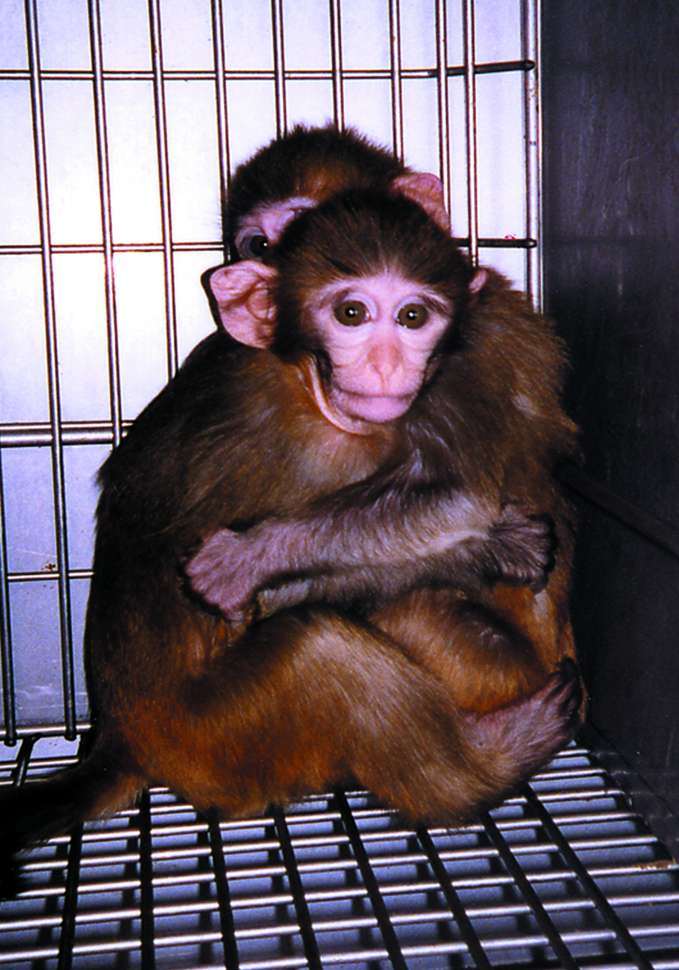 2_monkeys_hugging_Matt_(2).jpg