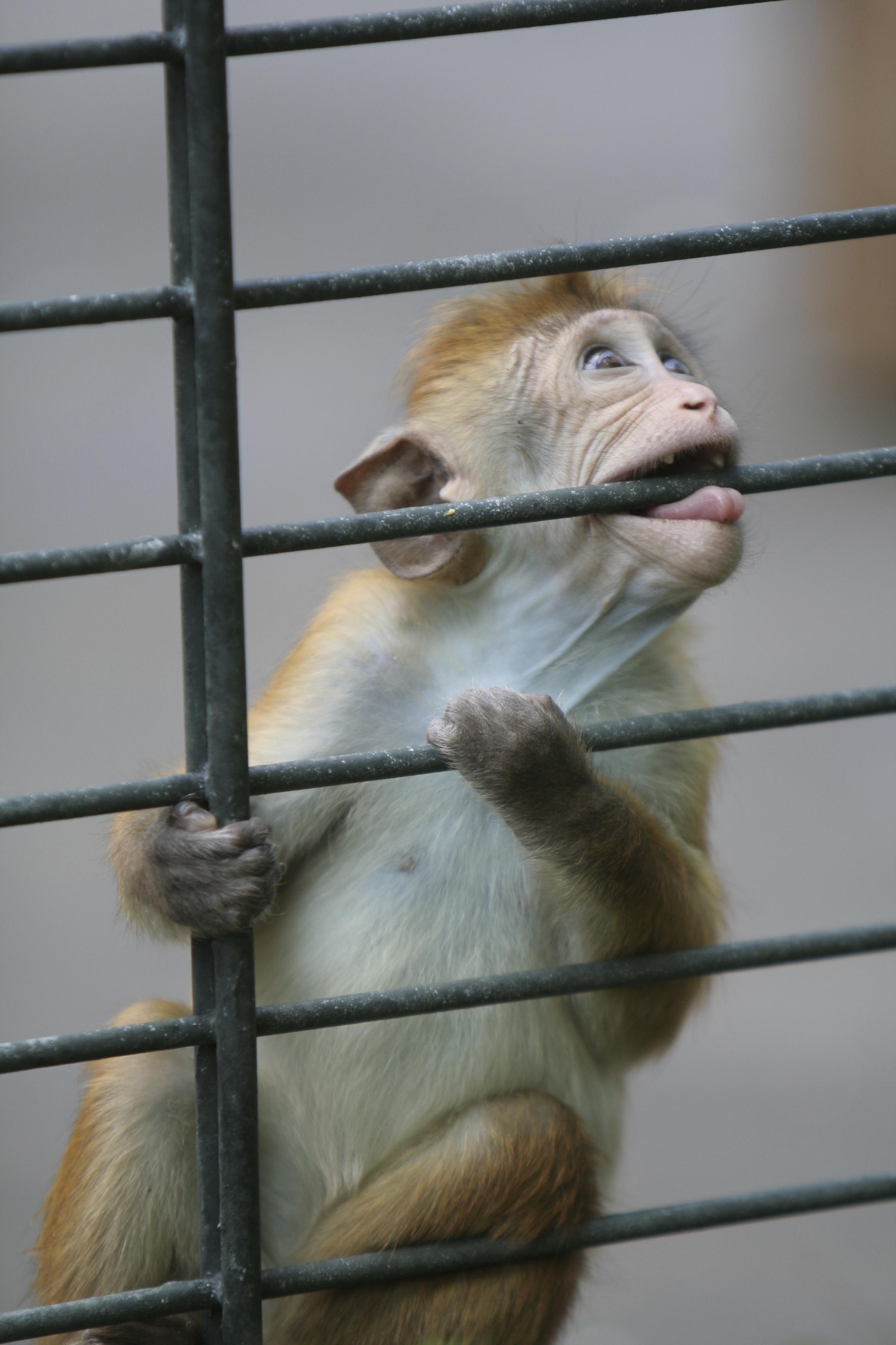 baby_monkey_biting_bars.jpg