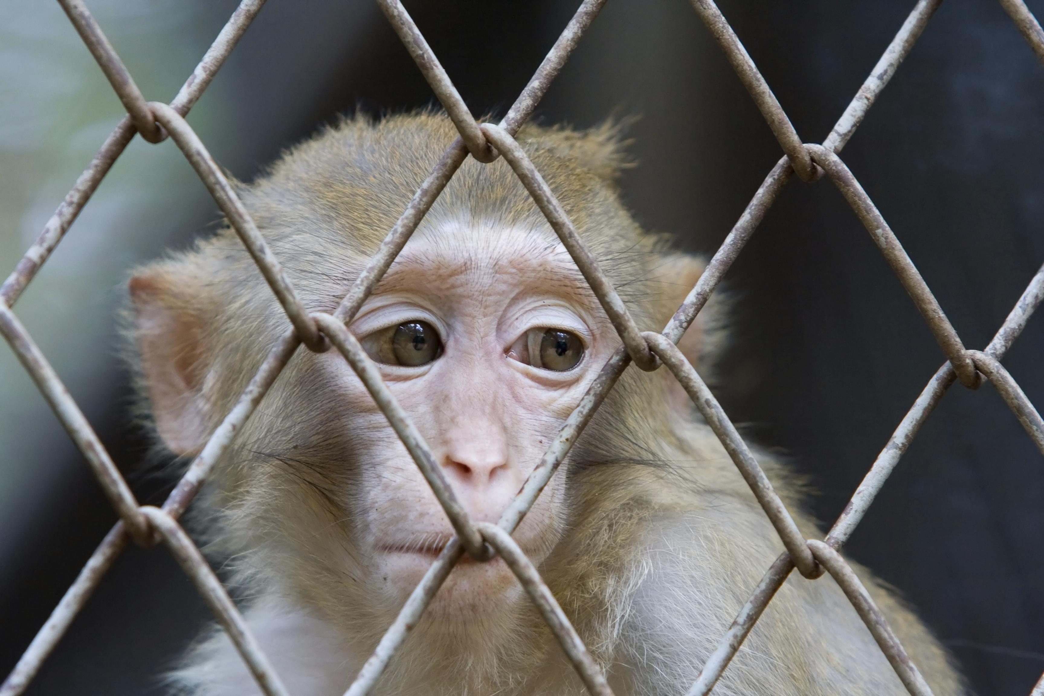 monkey_caged_sad.jpg