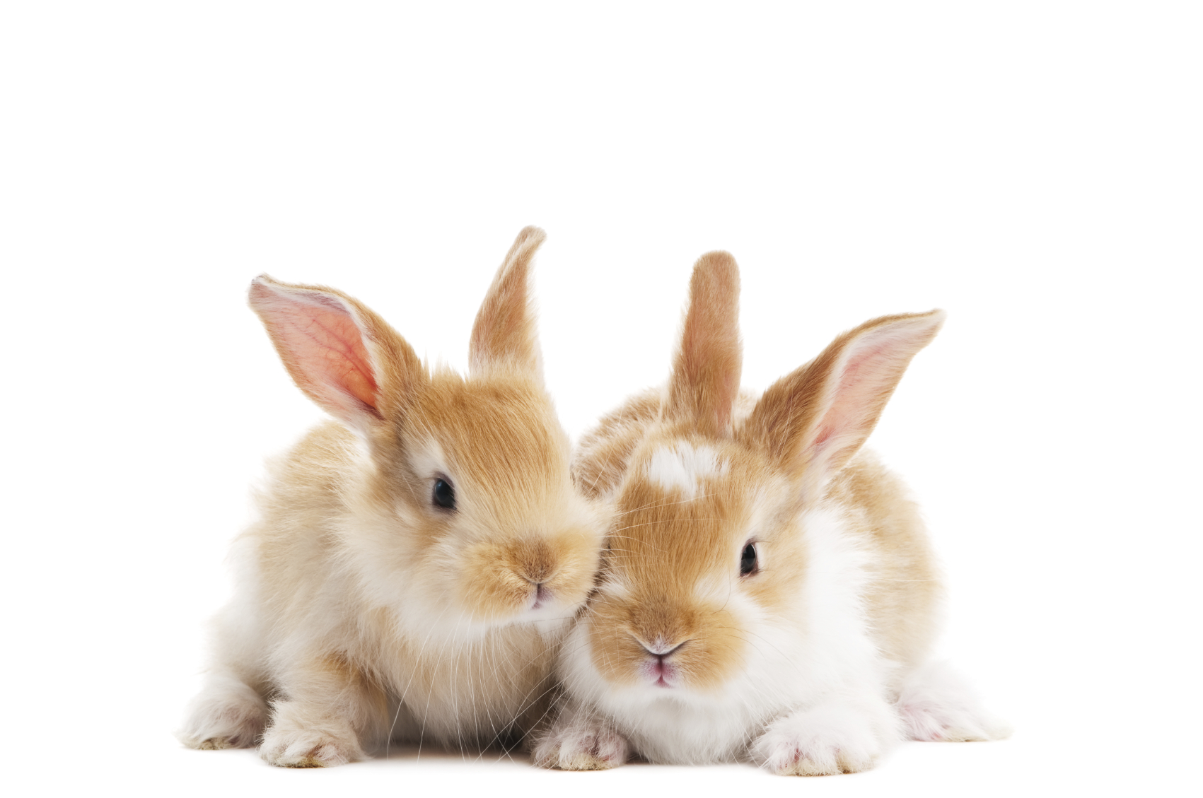 rabbits_two_side_by_side.jpg