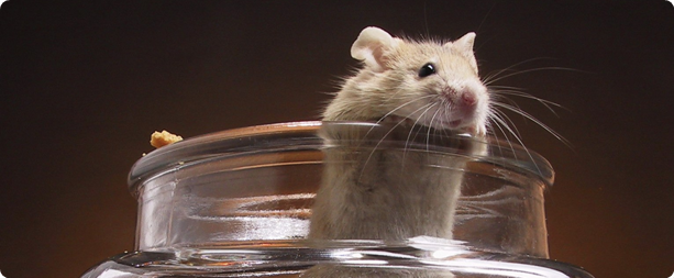 mouse_in_beaker.png