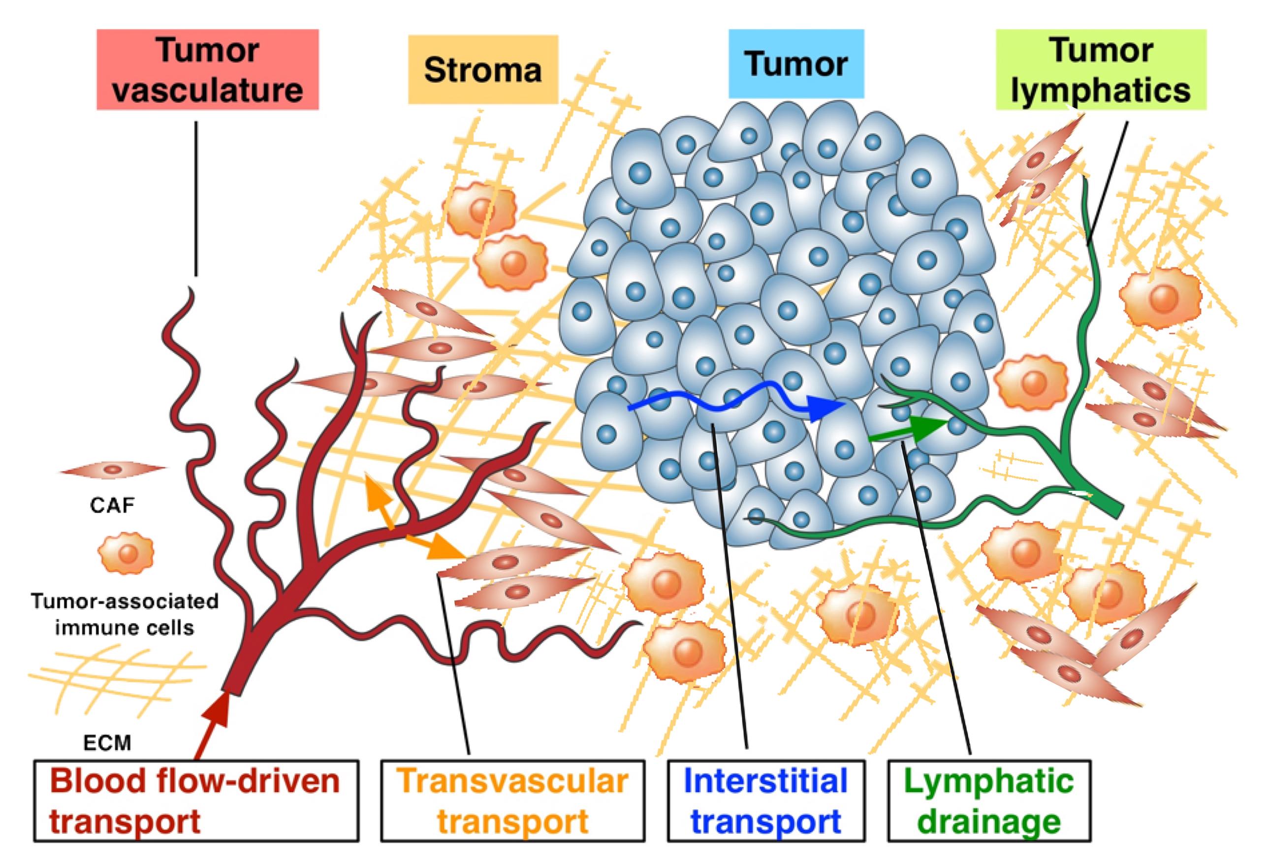 cancer_nanotech.jpg
