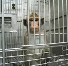 monkey_in_cage_facing_out.jpg