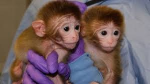 baby_monkeys_in_hands.jpg