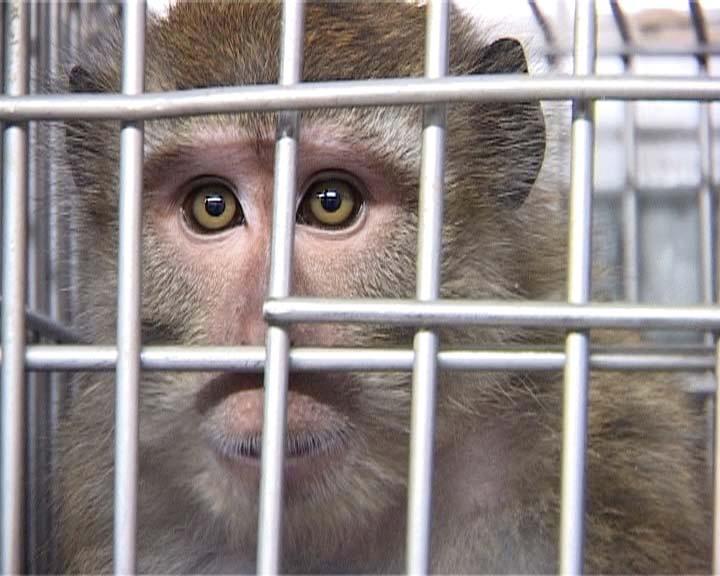 monkey_close_up_An_Voice.jpg