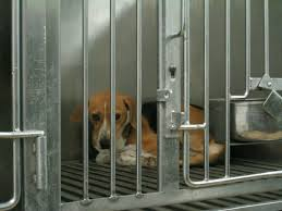beagle_sad_in_cage.jpg