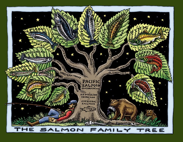 salmon_family_tree.jpg