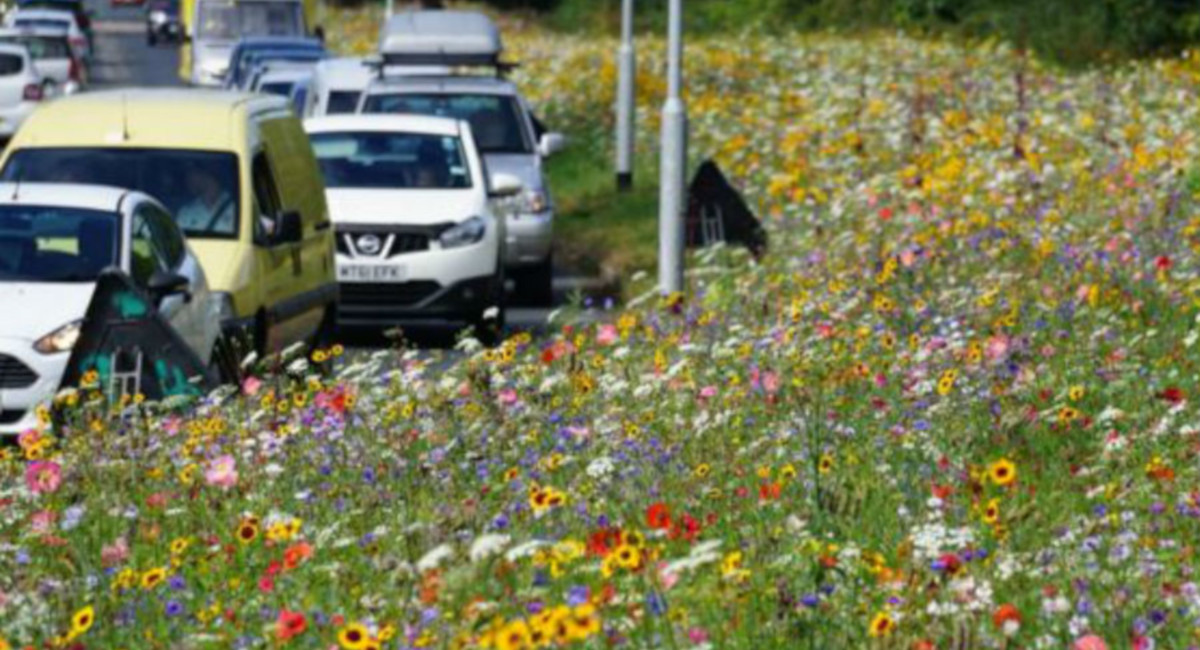 LIB DEM CALL FOR WILD FLOWERS
