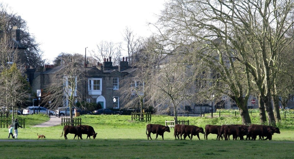 Lib Dem councillors call on Labour to withdraw threat to grazing on city commons