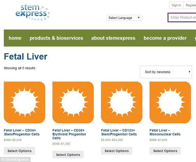 fetal-liver.jpg