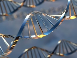 1-DNA-300x225.jpg