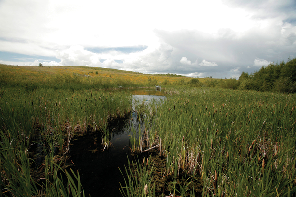 Syncrude Bill's Lake Oil Sands Reclaimed