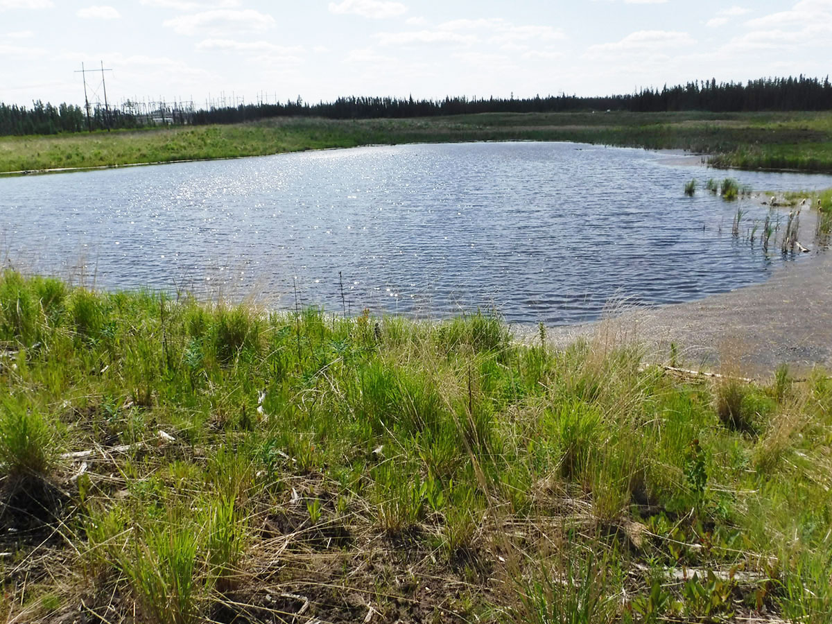 Cenovus - Christina Lake Oil Sands Land Reclamation Borrow Pit 8