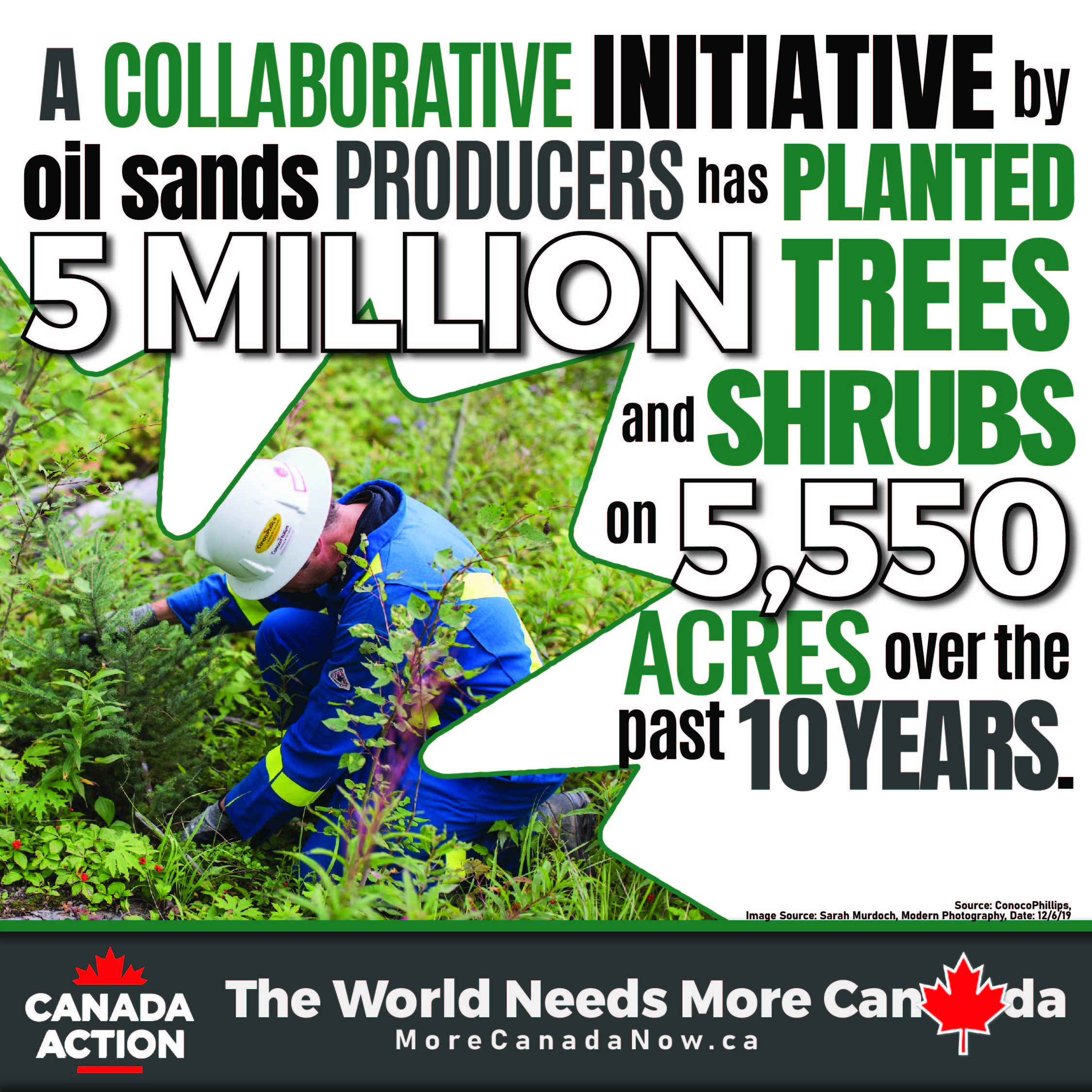 Canadian oil and gas companies replanting forests