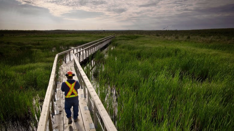 Oil Sands Reclamation: 20+ Photos of Reclaimed Oil Sands