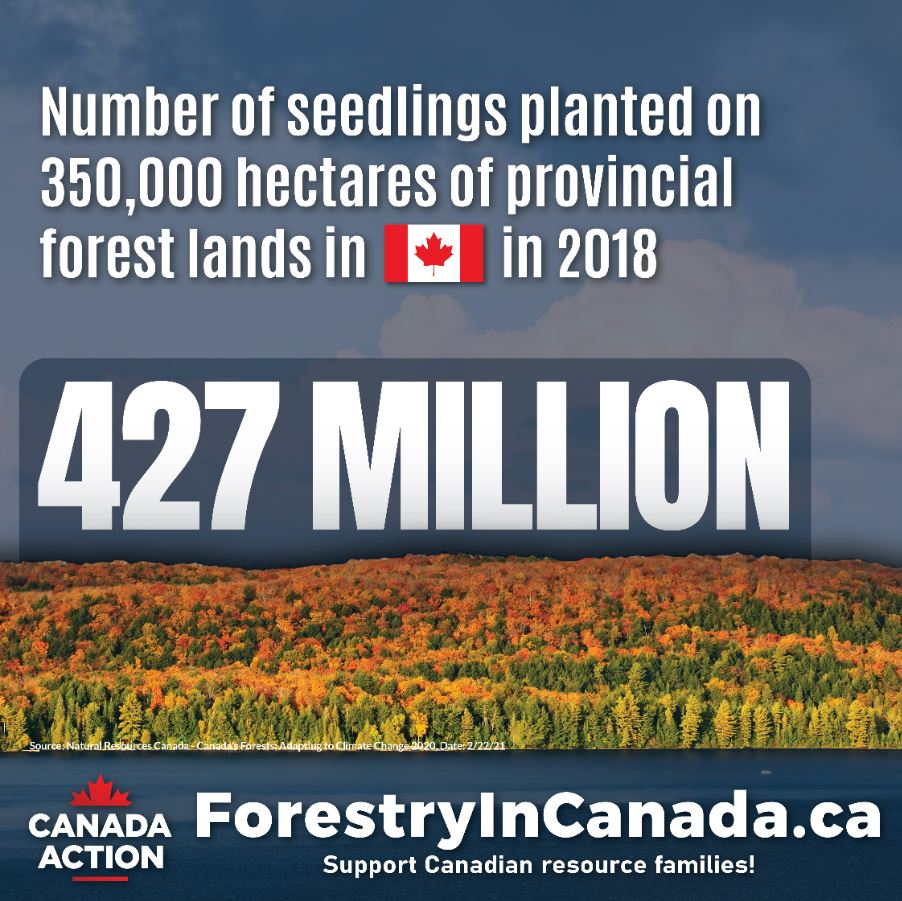 forest industry facts canada seedlings planted in 2018