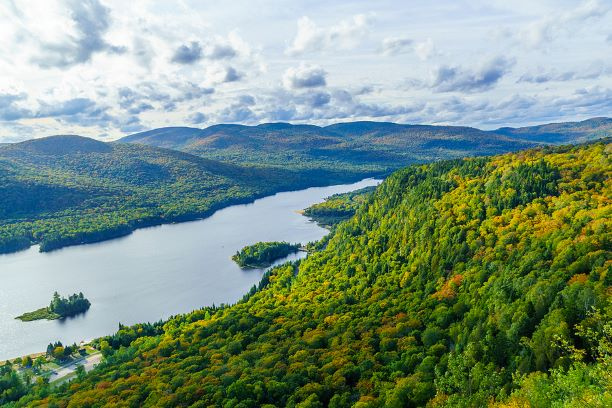 Forestry in Quebec: By the Numbers