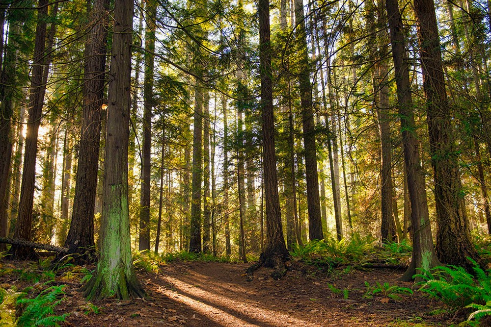 a wooded forest in Canada
