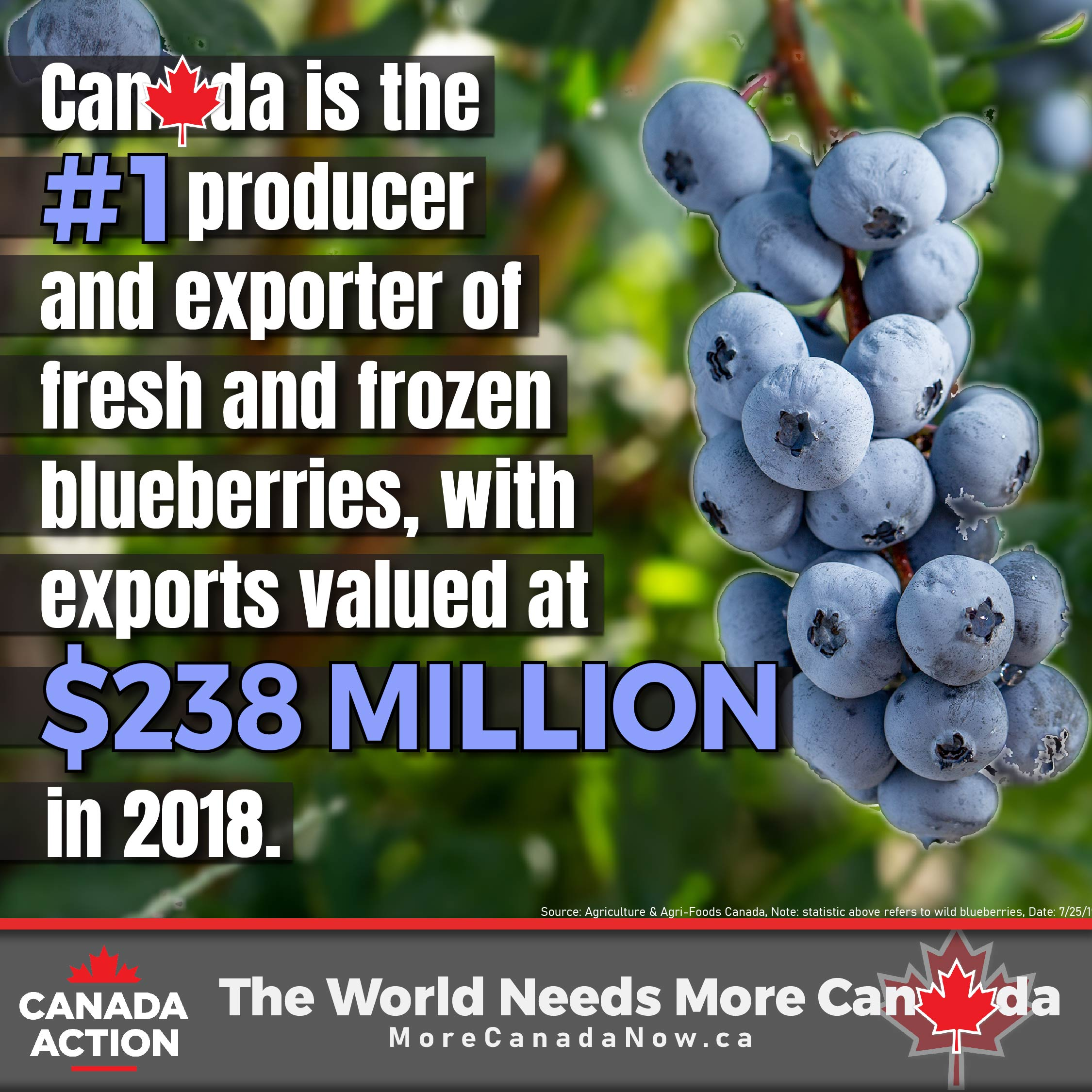 blueberry farming in canada - #1 global producer and exporter fresh frozen blueberries