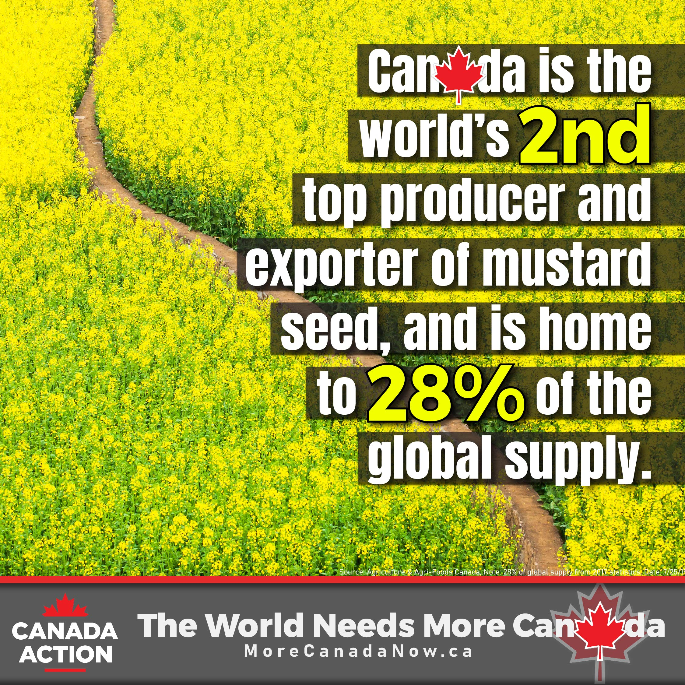 canadian canola seed farming - 2nd largest producer and exporter