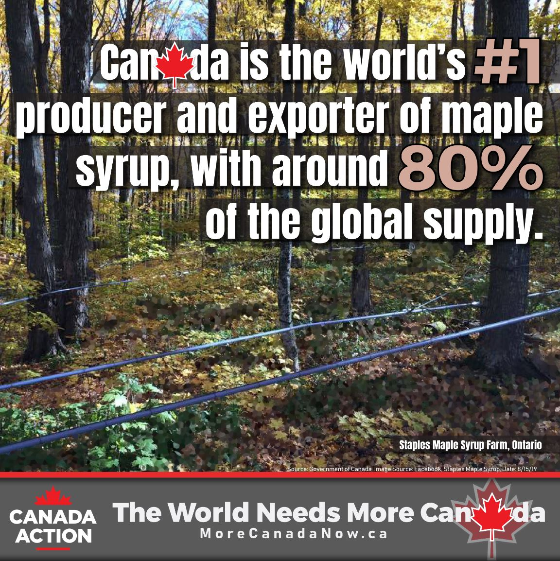maple syrup farming in Canada - #1 producer and exporter