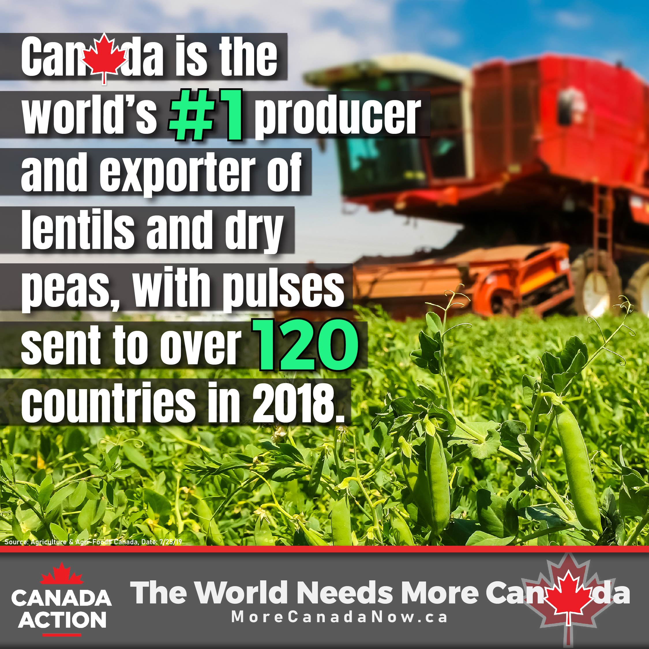 canada lentils dry peas farming - #1 global producer and exporter