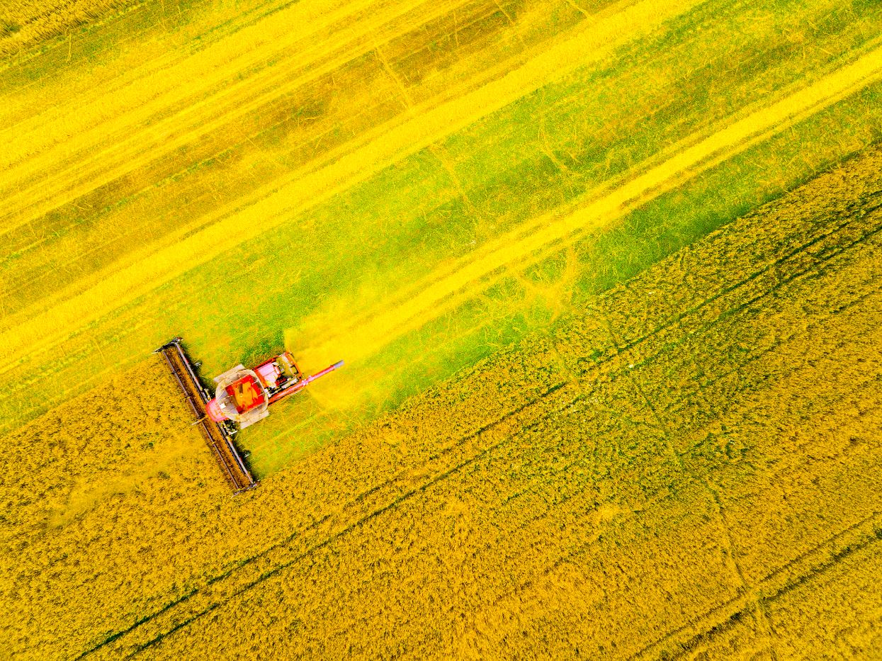 canadian farming canola field tractor