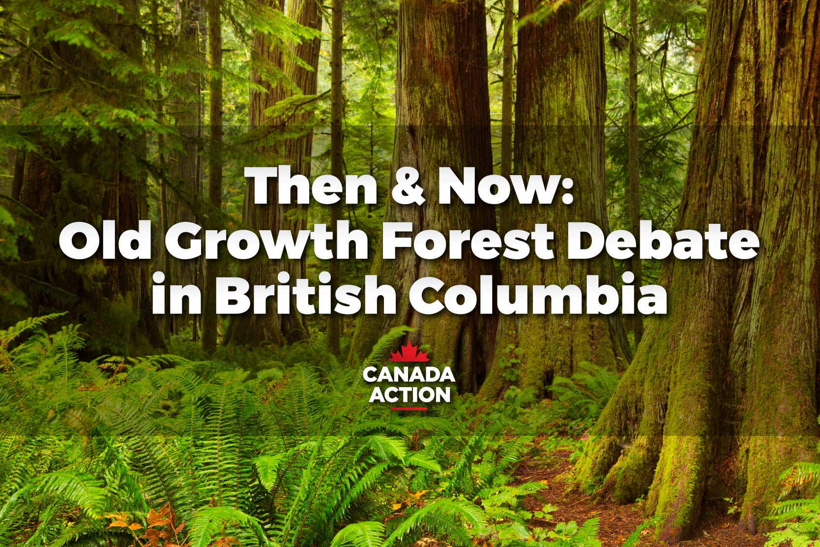 Three Decades of Forest Debate in British Columbia, But the Friction Continues