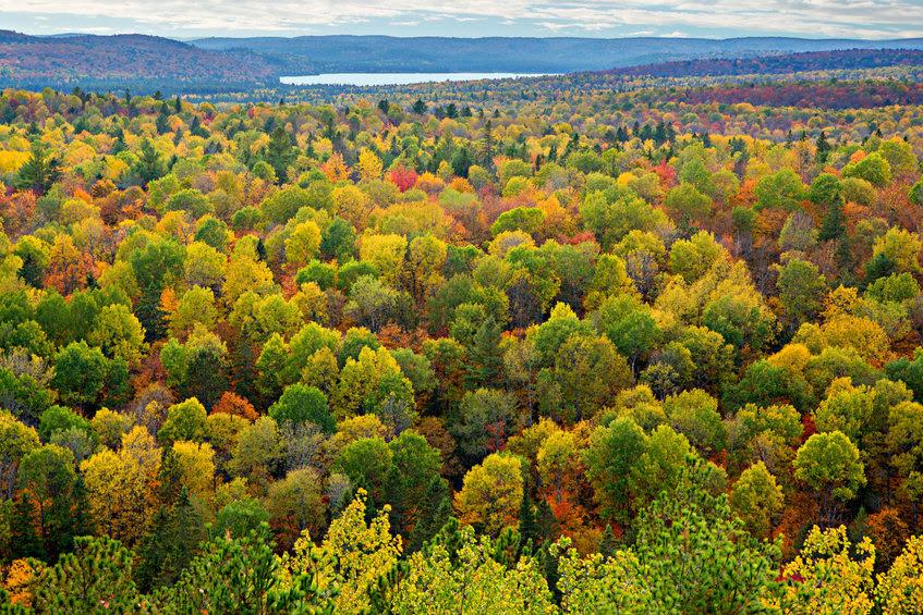 Canada forestry sector environmental leadership