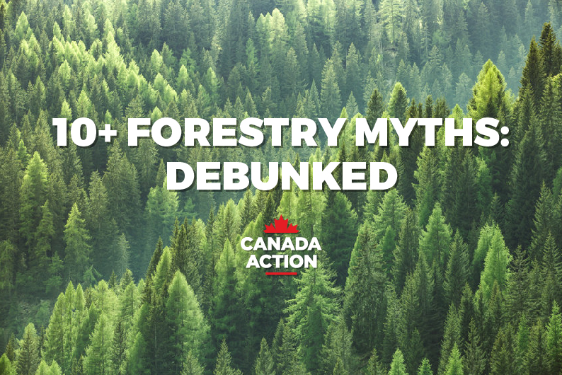 Image: 10+ Canadian Forestry Myths: Fact or Fiction?
