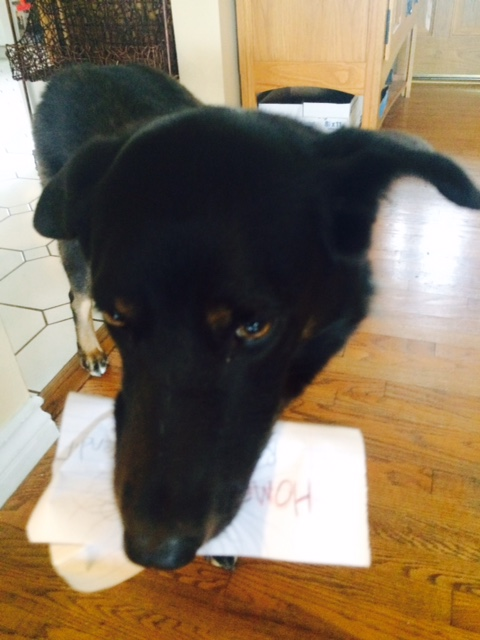 The_Dog_Ate_My_Homework.jpg