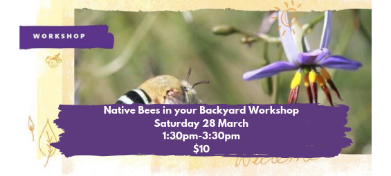 Native Bees in Your Backyard Workshop