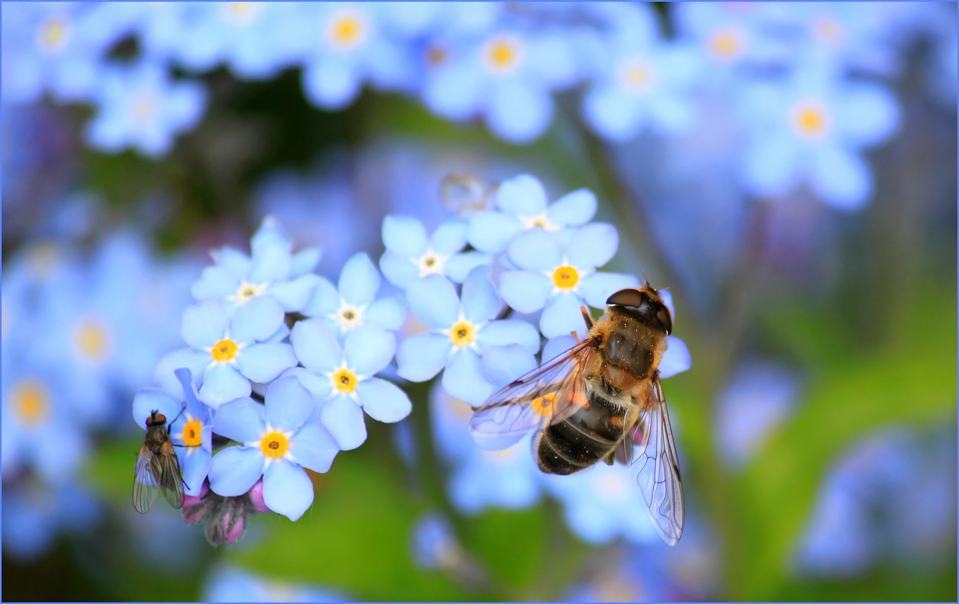 Native Bees in Your Backyard | City of Mitcham