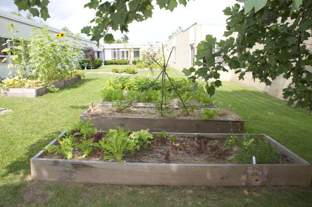 8-28-13 Cooke Garden2