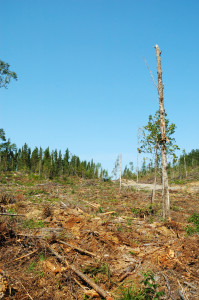 Climatekeeper Clear Cutting