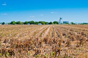 Drought on Farm