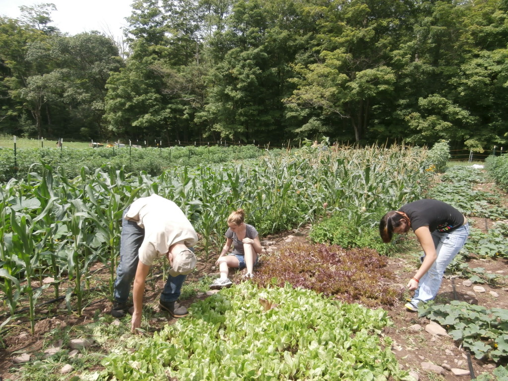Work Day at Berry Brook Farm in Roscoe, NY