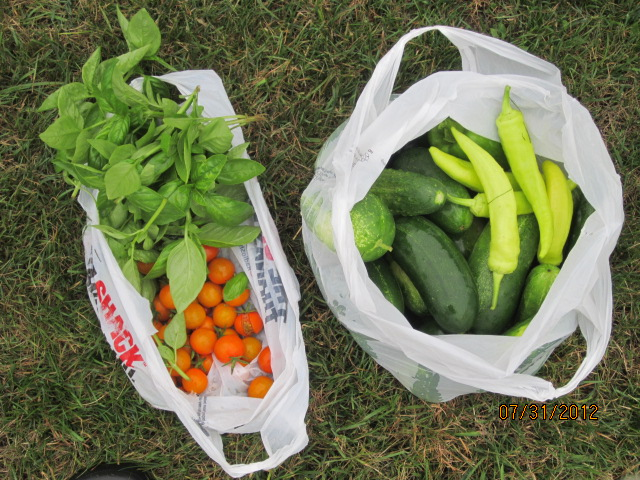 Summer Harvest Ready for Delivery to Food Pantry