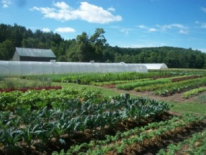 neversink farm rows